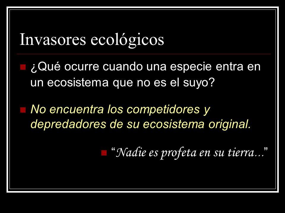 Invasores ecológicos ¿Qué ocurre cuando una especie entra en un ecosistema que no es el suyo? No encuentra los competidores y depredadores de su ecosi