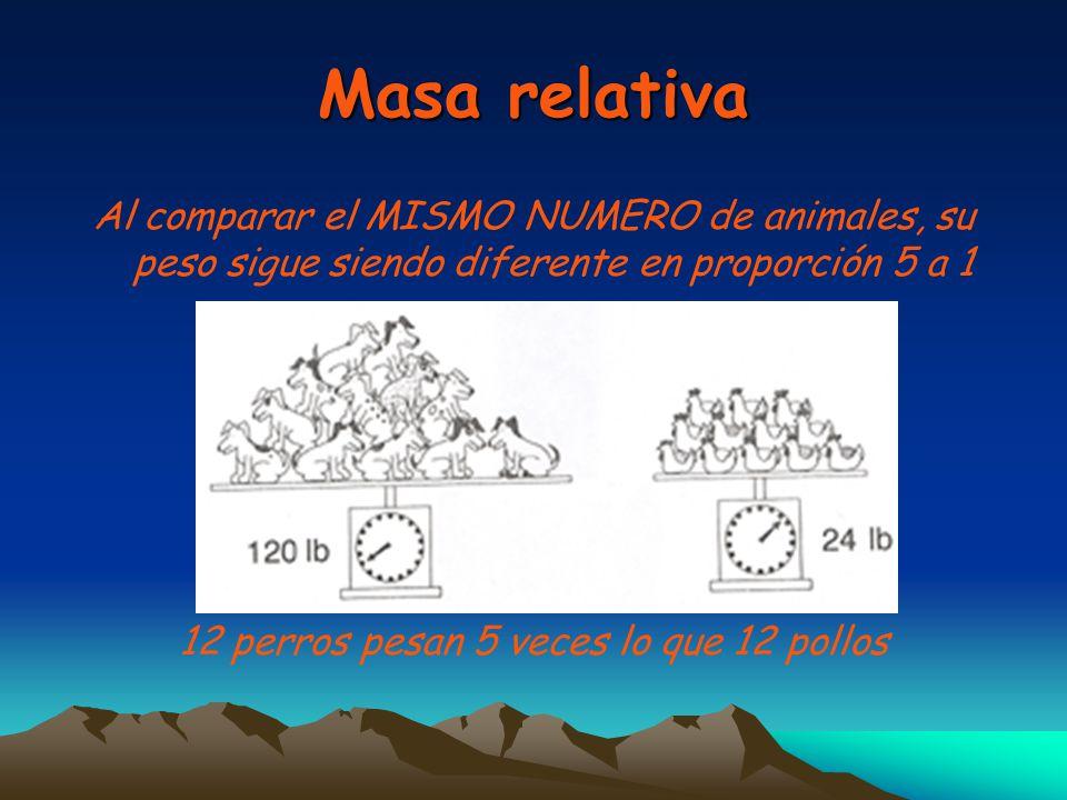Masa relativa Al comparar el MISMO NUMERO de animales, su peso sigue siendo diferente en proporción 5 a 1 12 perros pesan 5 veces lo que 12 pollos