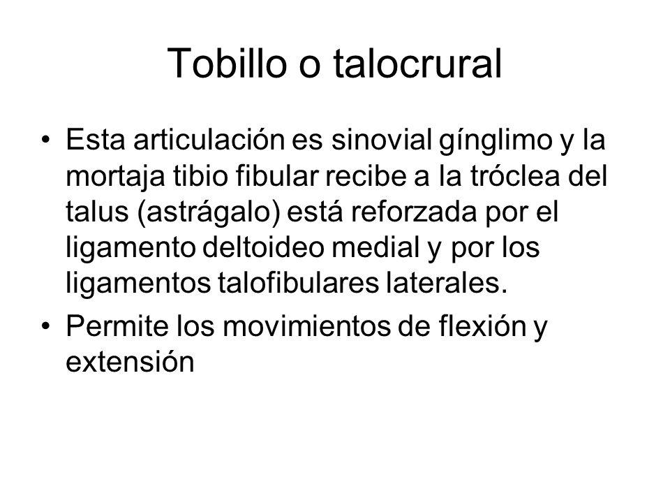 Tobillo o talocrural Esta articulación es sinovial gínglimo y la mortaja tibio fibular recibe a la tróclea del talus (astrágalo) está reforzada por el