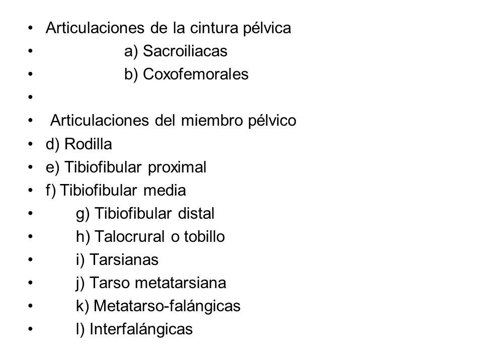 Articulaciones de la cintura pélvica a) Sacroiliacas b) Coxofemorales Articulaciones del miembro pélvico d) Rodilla e) Tibiofibular proximal f) Tibiof