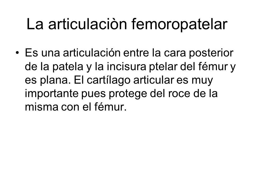 La articulaciòn femoropatelar Es una articulación entre la cara posterior de la patela y la incisura ptelar del fémur y es plana. El cartílago articul