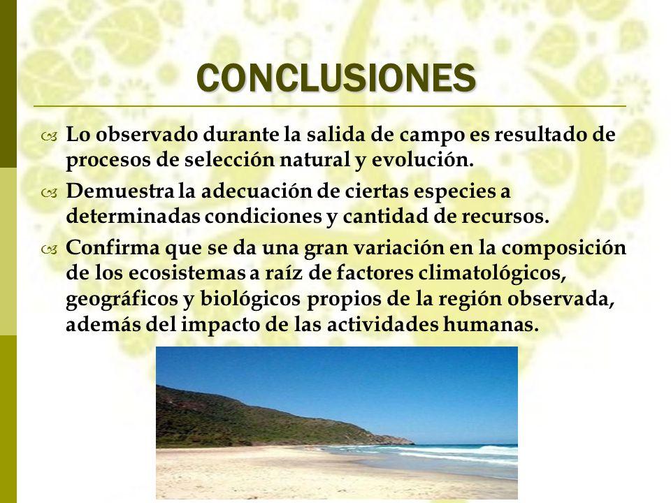 CONCLUSIONES Lo observado durante la salida de campo es resultado de procesos de selección natural y evolución. Demuestra la adecuación de ciertas esp