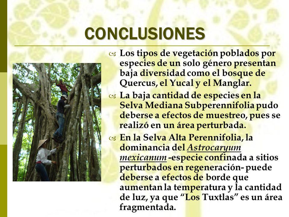 CONCLUSIONES Los tipos de vegetación poblados por especies de un solo género presentan baja diversidad como el bosque de Quercus, el Yucal y el Mangla