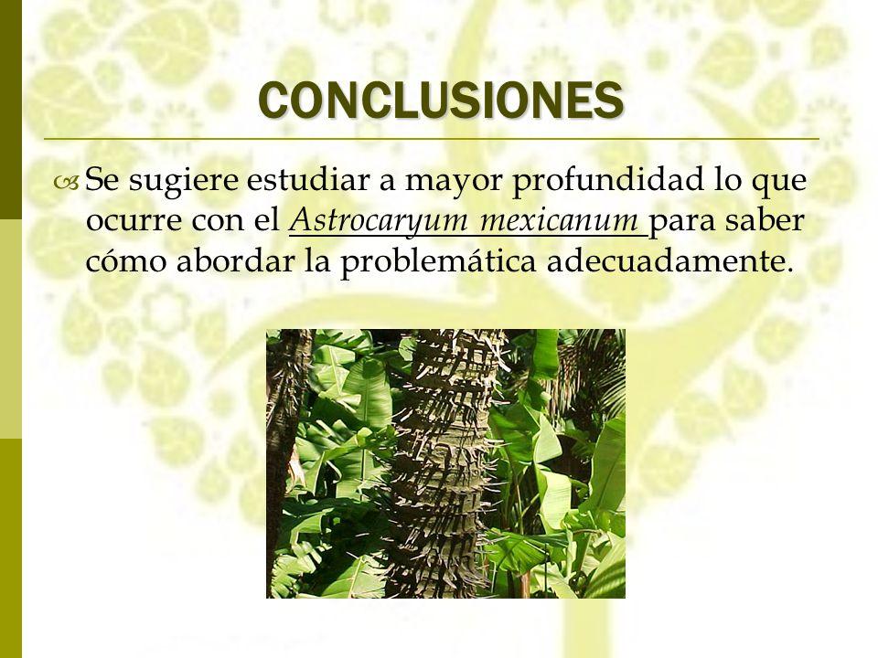 CONCLUSIONES Se sugiere estudiar a mayor profundidad lo que ocurre con el Astrocaryum mexicanum para saber cómo abordar la problemática adecuadamente.
