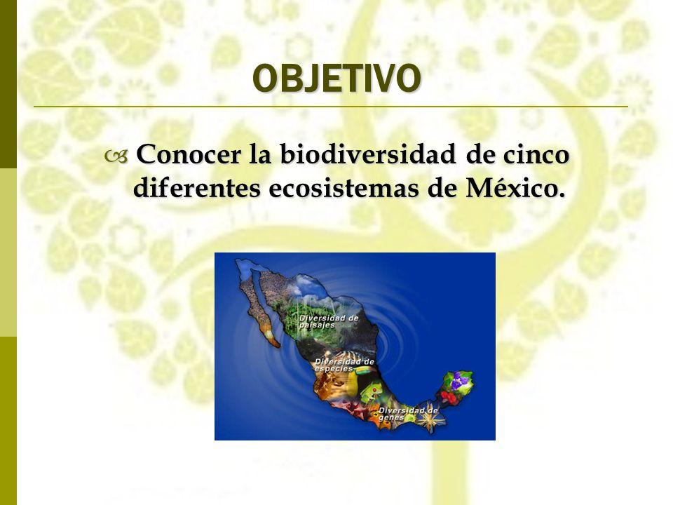 OBJETIVO Conocer la biodiversidad de cinco diferentes ecosistemas de México. Conocer la biodiversidad de cinco diferentes ecosistemas de México.