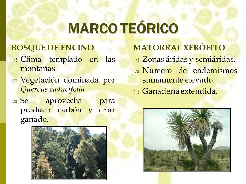 MARCO TEÓRICO BOSQUE DE ENCINO Clima templado en las montañas. Vegetación dominada por Quercus caducifolia. Se aprovecha para producir carbón y criar