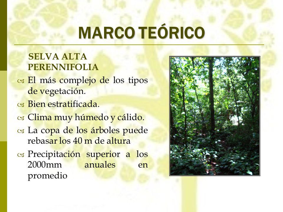 MARCO TEÓRICO SELVA ALTA PERENNIFOLIA El más complejo de los tipos de vegetación. Bien estratificada. Clima muy húmedo y cálido. La copa de los árbole