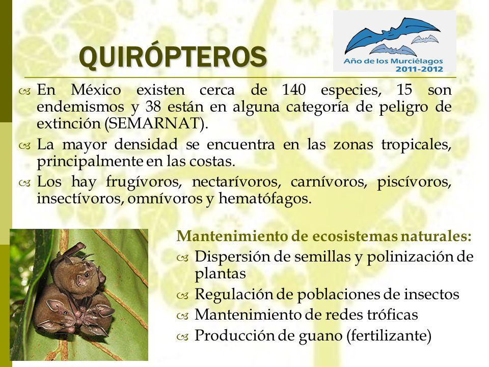QUIRÓPTEROS Mantenimiento de ecosistemas naturales: Dispersión de semillas y polinización de plantas Regulación de poblaciones de insectos Mantenimien