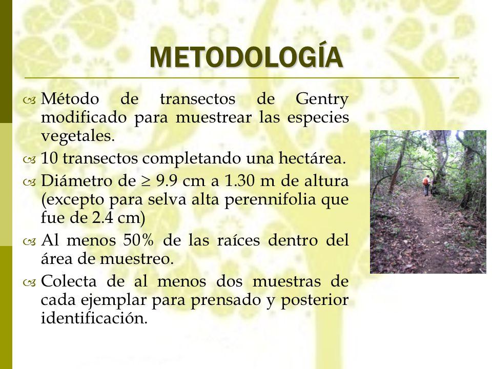 METODOLOGÍA Método de transectos de Gentry modificado para muestrear las especies vegetales. 10 transectos completando una hectárea. Diámetro de 9.9 c
