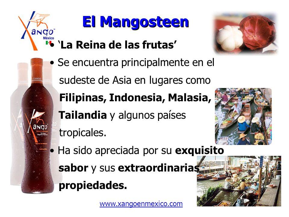El Mangosteen La Reina de las frutas Se encuentra principalmente en el sudeste de Asia en lugares como Filipinas, Indonesia, Malasia, Tailandia y algu
