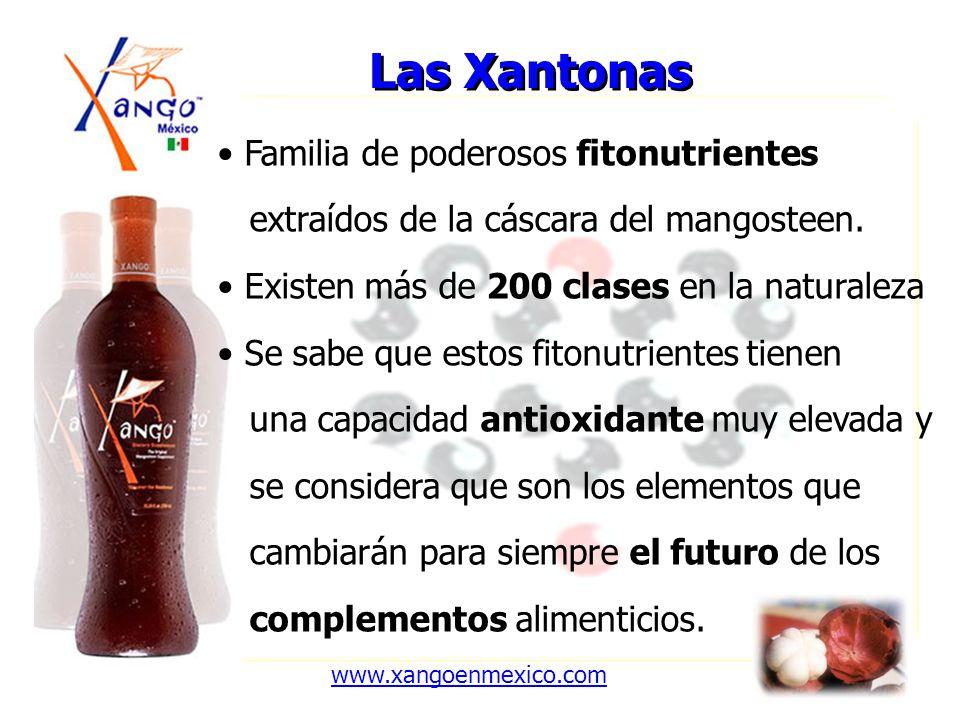 Las Xantonas Familia de poderosos fitonutrientes extraídos de la cáscara del mangosteen. Existen más de 200 clases en la naturaleza Se sabe que estos