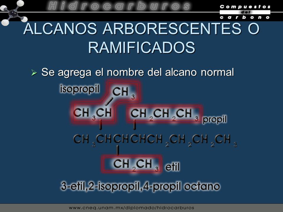 Se agrega el nombre del alcano normal Se agrega el nombre del alcano normal ALCANOS ARBORESCENTES O RAMIFICADOS