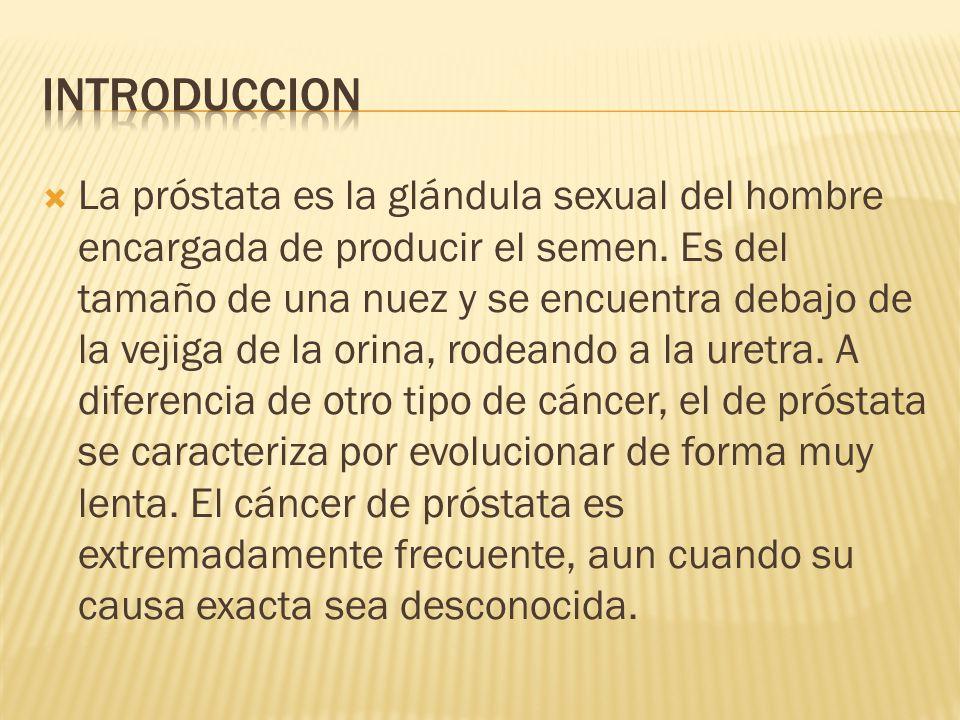 La próstata es la glándula sexual del hombre encargada de producir el semen. Es del tamaño de una nuez y se encuentra debajo de la vejiga de la orina,