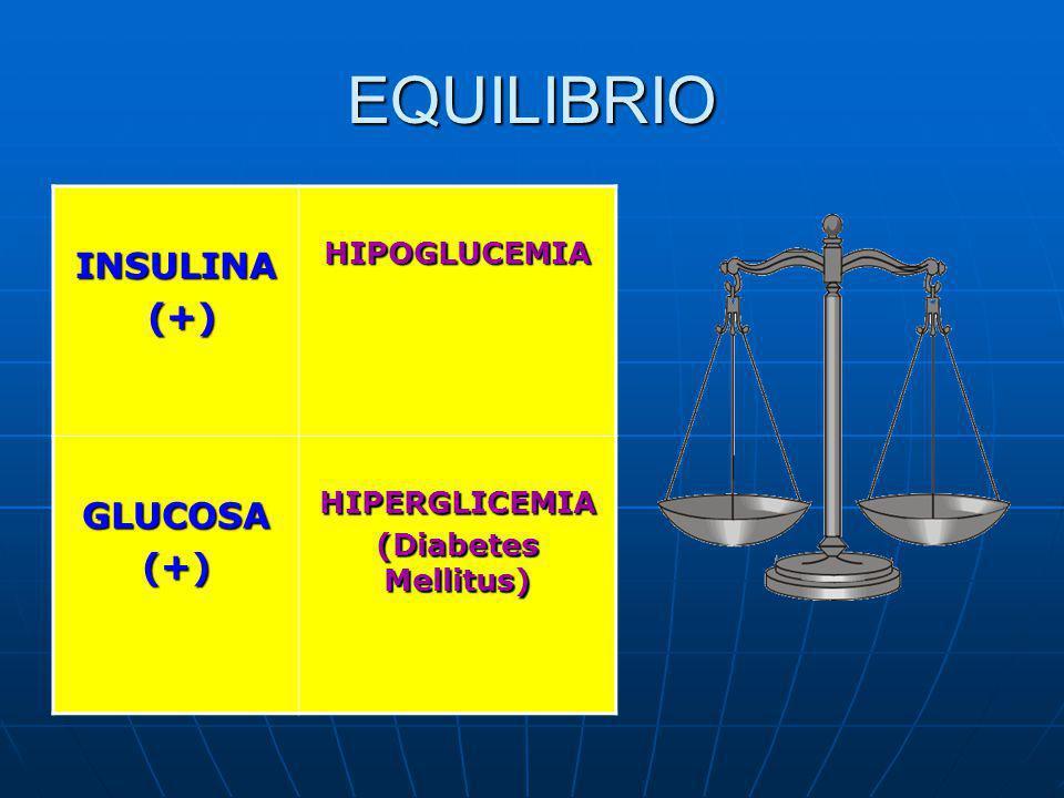 EQUILIBRIO INSULINA (+) (+)HIPOGLUCEMIA GLUCOSA(+)HIPERGLICEMIA (Diabetes Mellitus)