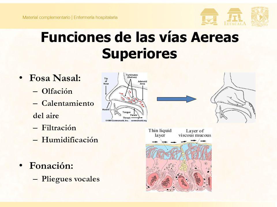 Funciones de las vías Aereas Superiores Fosa Nasal: – Olfación – Calentamiento del aire – Filtración – Humidificación Fonación: – Pliegues vocales