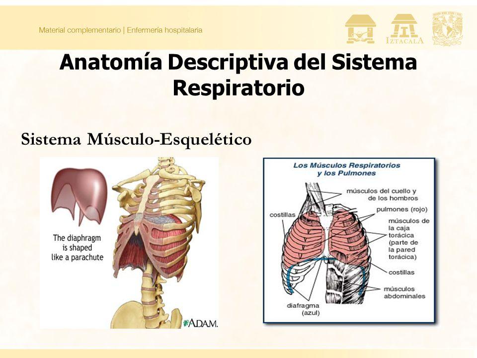 Informatica: ANATOMIA Y FISIOLOGIA