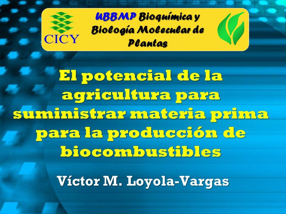 UBBMP Bioquímica y Biología Molecular de Plantas El potencial de la agricultura para suministrar materia prima para la producción de biocombustibles V