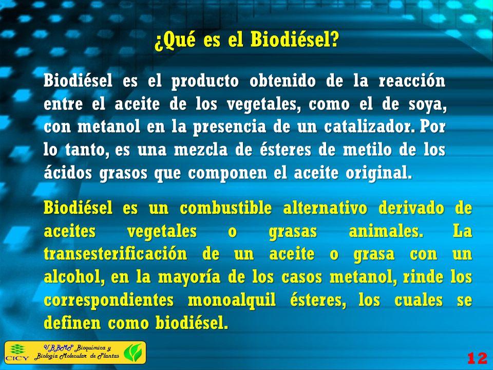 UBBMP Bioquímica y Biología Molecular de Plantas ¿Qué es el Biodiésel? 12 Biodiésel es el producto obtenido de la reacción entre el aceite de los vege