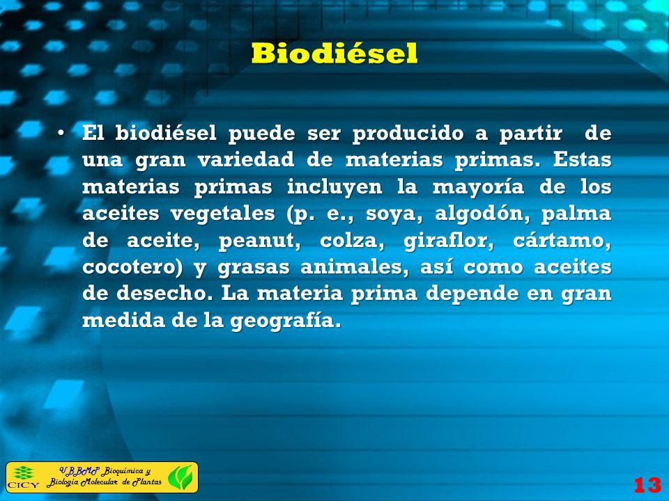 UBBMP Bioquímica y Biología Molecular de Plantas Biodiésel El biodiésel puede ser producido a partir de una gran variedad de materias primas. Estas ma