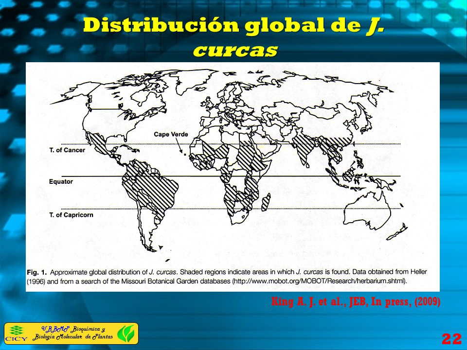 UBBMP Bioquímica y Biología Molecular de Plantas Distribución global de J. curcas 22 King A. J. et al., JEB, In press, (2009)