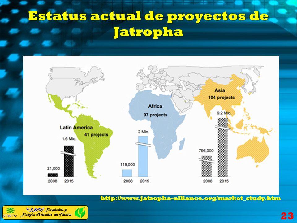 UBBMP Bioquímica y Biología Molecular de Plantas Estatus actual de proyectos de Jatropha 23 http://www.jatropha-alliance.org/market_study.htm