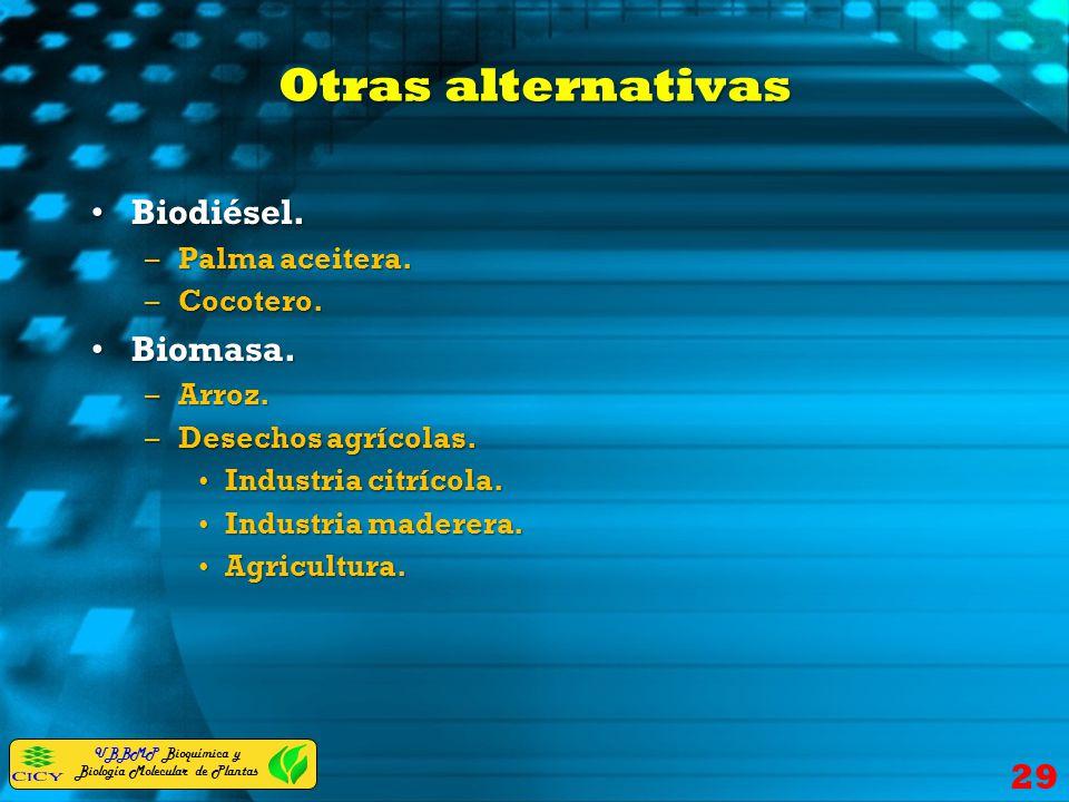 UBBMP Bioquímica y Biología Molecular de Plantas Otras alternativas Biodiésel.Biodiésel. –Palma aceitera. –Cocotero. Biomasa.Biomasa. –Arroz. –Desecho