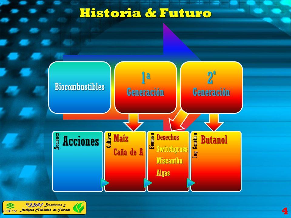 Historia & Futuro 4 Biocombustibles 1 a Generación 2 ª Generación AccionesAcciones CultivosMaíz Caña de A BiomasaDesechosSwitchgrassMiscanthuAlgas Ing