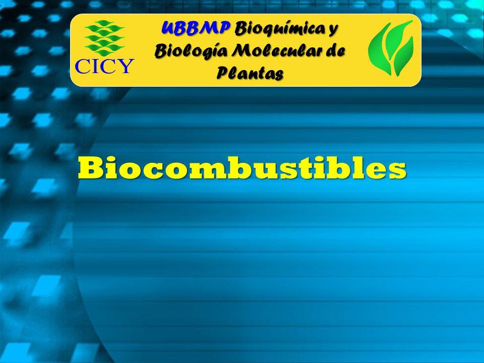 UBBMP Bioquímica y Biología Molecular de Plantas Biocombustibles