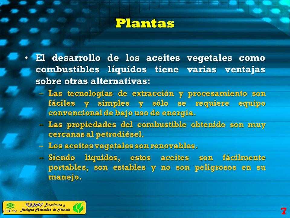 UBBMP Bioquímica y Biología Molecular de Plantas Plantas El desarrollo de los aceites vegetales como combustibles líquidos tiene varias ventajas sobre
