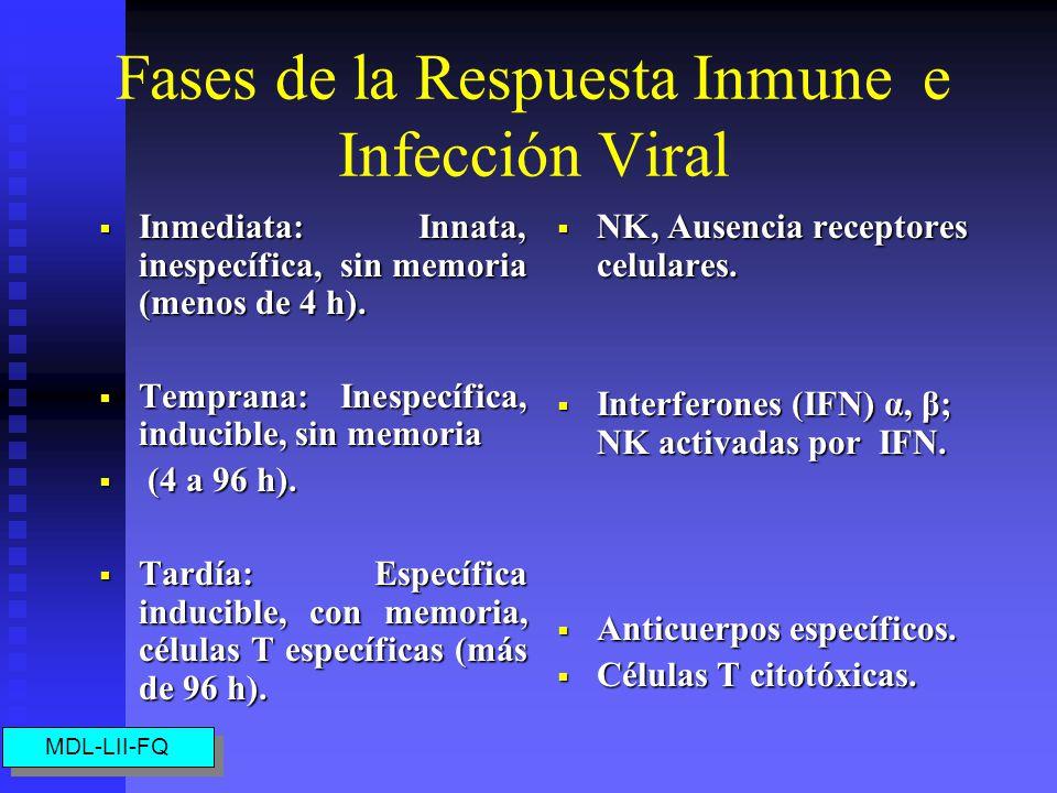 Células que intervienen en la Respuesta a Virus Las células T CD8+ se activan en la respuesta aguda ante virus inductores. Las células T CD8+ se activ