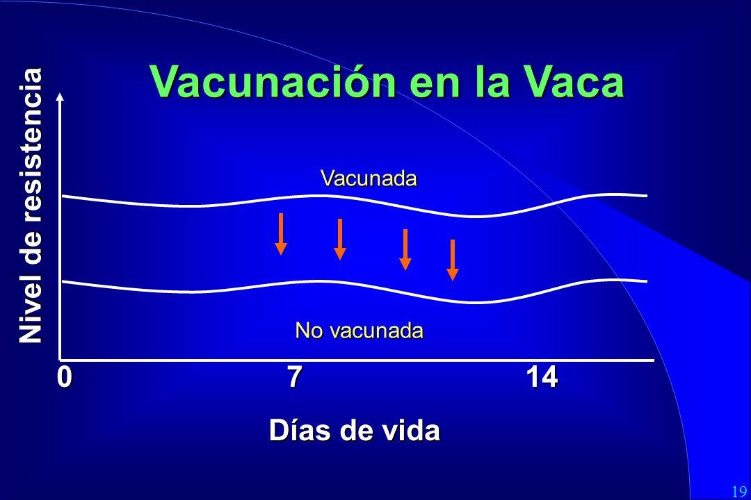19 0 7 14 Días de vida Vacunación en la Vaca Vacunada Nivel de resistencia No vacunada
