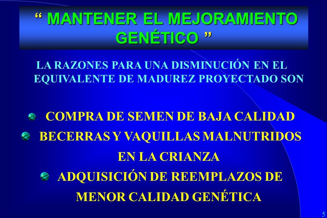 5 MEJORAMIENTO GENETICO LA RAZONES PARA UNA DISMINUCIÓN EN EL EQUIVALENTE DE MADUREZ PROYECTADO SON COMPRA DE SEMEN DE BAJA CALIDAD BECERRAS Y VAQUILLAS MALNUTRIDOS EN LA CRIANZA ADQUISICIÓN DE REEMPLAZOS DE MENOR CALIDAD GENÉTICA MANTENER EL MEJORAMIENTO GENÉTICO MANTENER EL MEJORAMIENTO GENÉTICO