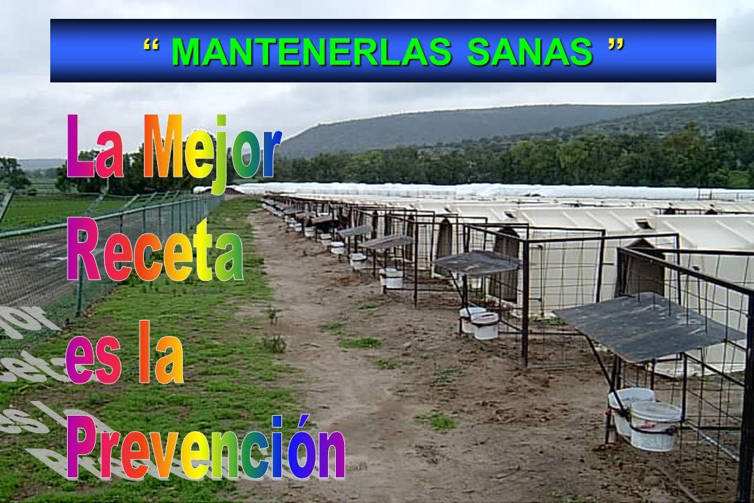 67 MANTENERLAS SANAS MANTENERLAS SANAS