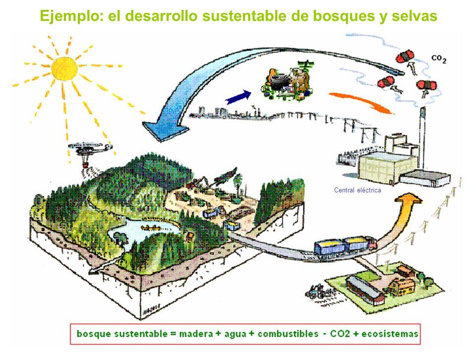 Ejemplo: el desarrollo sustentable de bosques y selvas Central eléctrica
