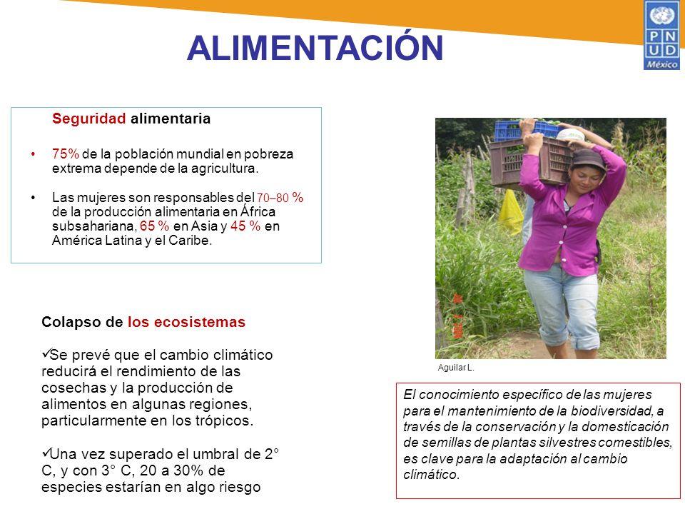 ALIMENTACIÓN Seguridad alimentaria 75% de la población mundial en pobreza extrema depende de la agricultura. Las mujeres son responsables del 70–80 %