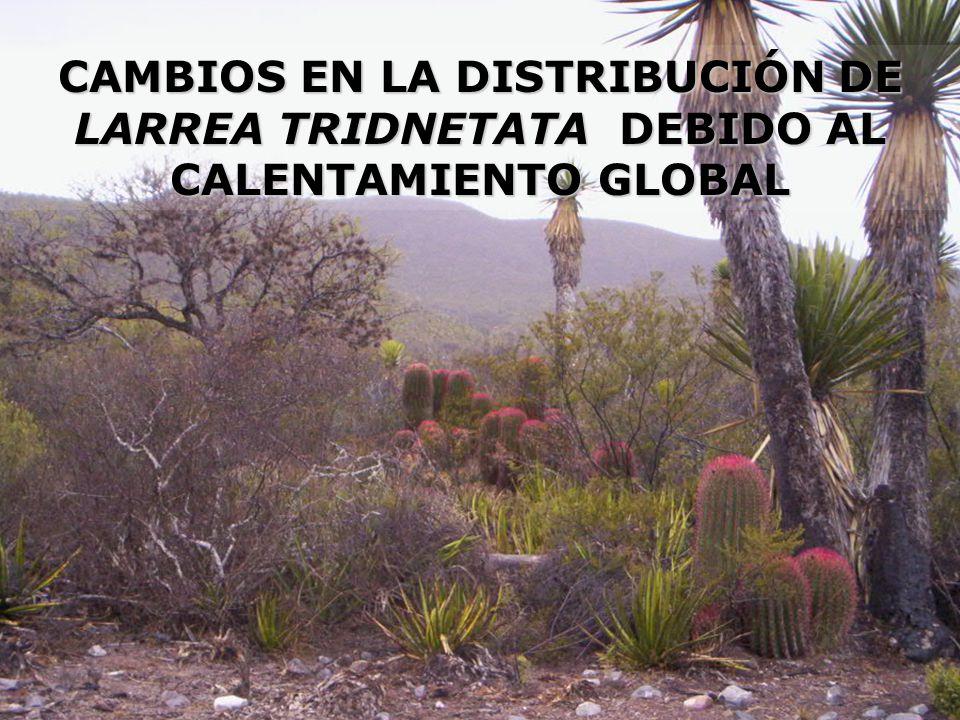 CAPÍTULO II CAMBIOS EN LA DISTRIBUCIÓN DE LARREA TRIDNETATA DEBIDO AL CALENTAMIENTO GLOBAL