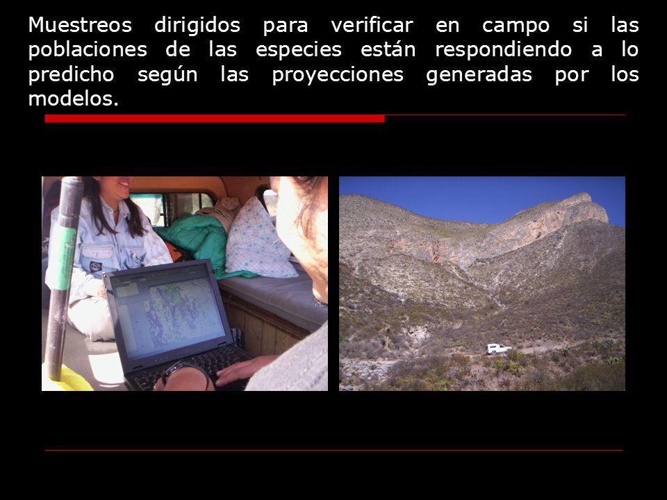 Muestreos dirigidos para verificar en campo si las poblaciones de las especies están respondiendo a lo predicho según las proyecciones generadas por l