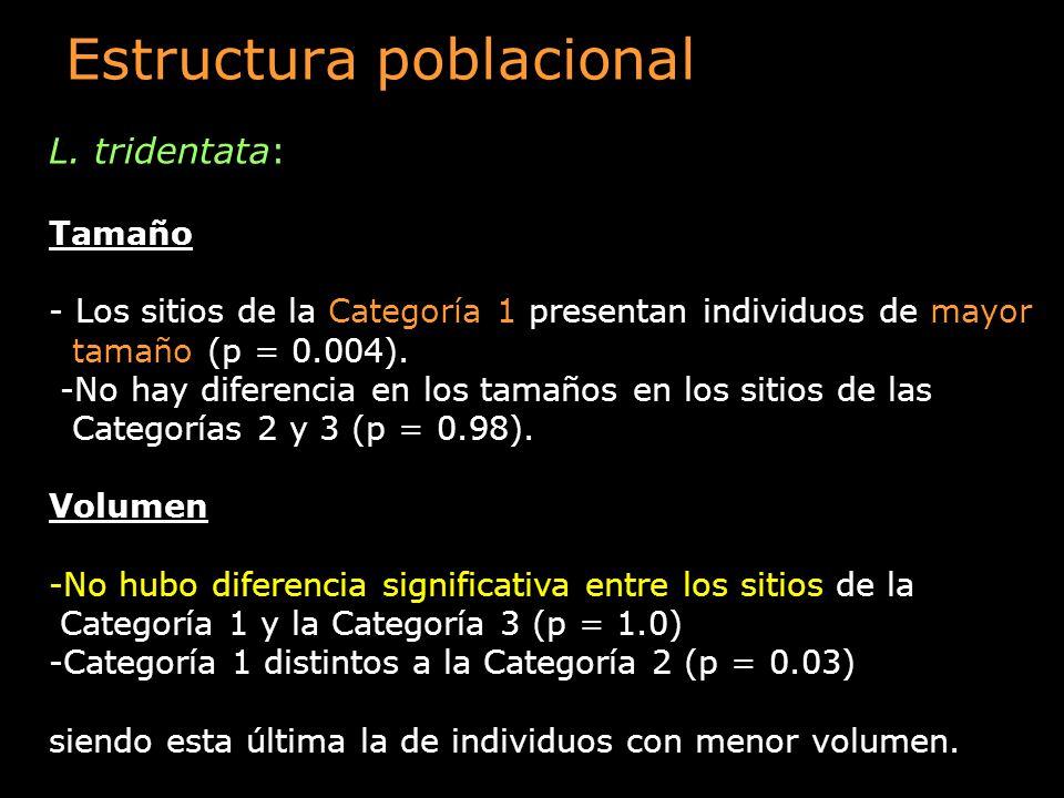 Estructura poblacional L. tridentata: Tamaño - Los sitios de la Categoría 1 presentan individuos de mayor tamaño (p = 0.004). -No hay diferencia en lo