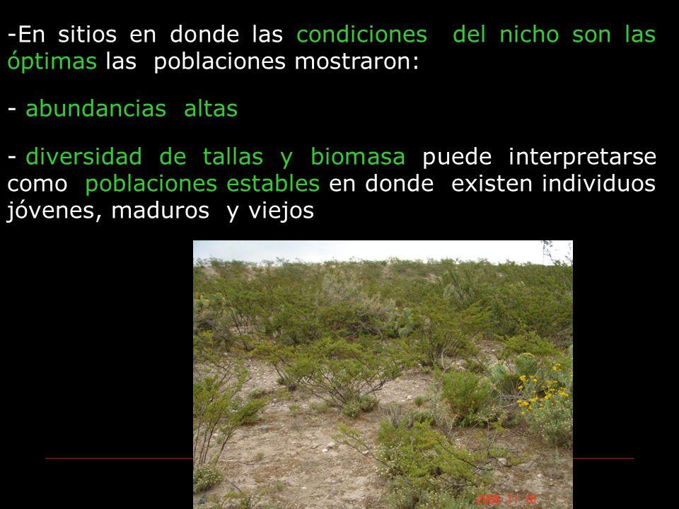 -En sitios en donde las condiciones del nicho son las óptimas las poblaciones mostraron: - abundancias altas - diversidad de tallas y biomasa puede in