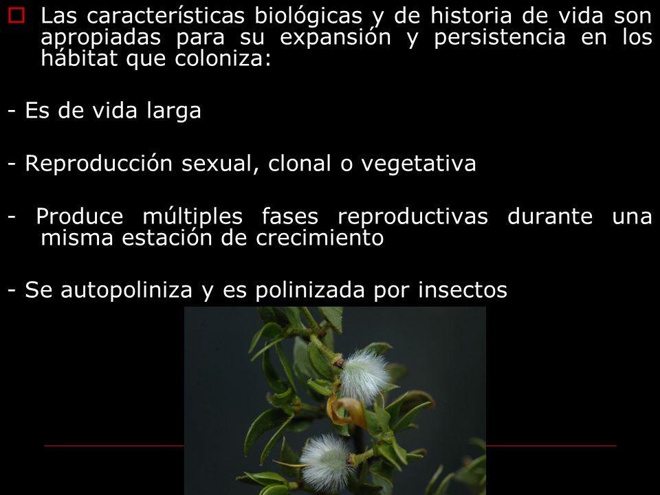 Las características biológicas y de historia de vida son apropiadas para su expansión y persistencia en los hábitat que coloniza: - Es de vida larga -