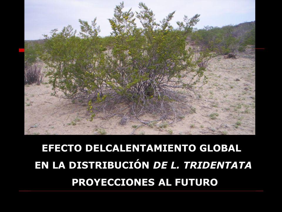 CAPÍTULO III EFECTO DELCALENTAMIENTO GLOBAL EN LA DISTRIBUCIÓN DE L. TRIDENTATA PROYECCIONES AL FUTURO