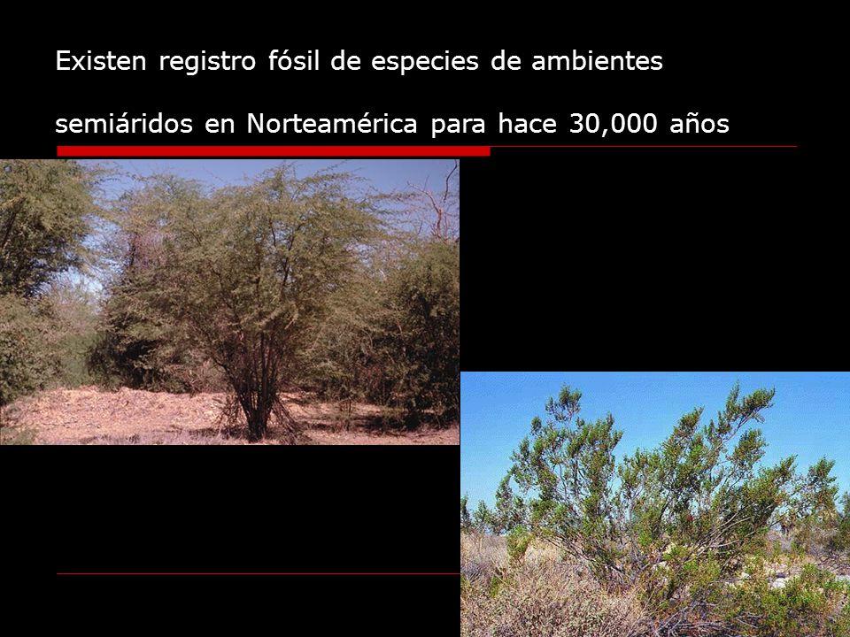 Existen registro fósil de especies de ambientes semiáridos en Norteamérica para hace 30,000 años