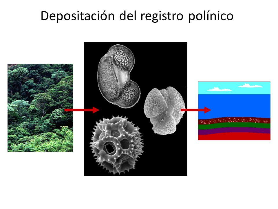 Confiabilidad del registro polínico en México Correa-Metrio et al. (2011), The Holocene.