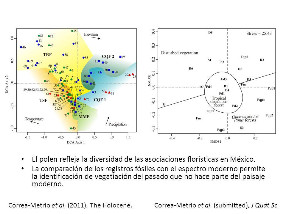 Análogos modernos: La Península de Yucatan Lago Petén-Itzá: Registro sedimentario continuo de los últimos 86,000 años Análisis de polen cada ~180 años condujo a la reconstrucción de la vegetación.