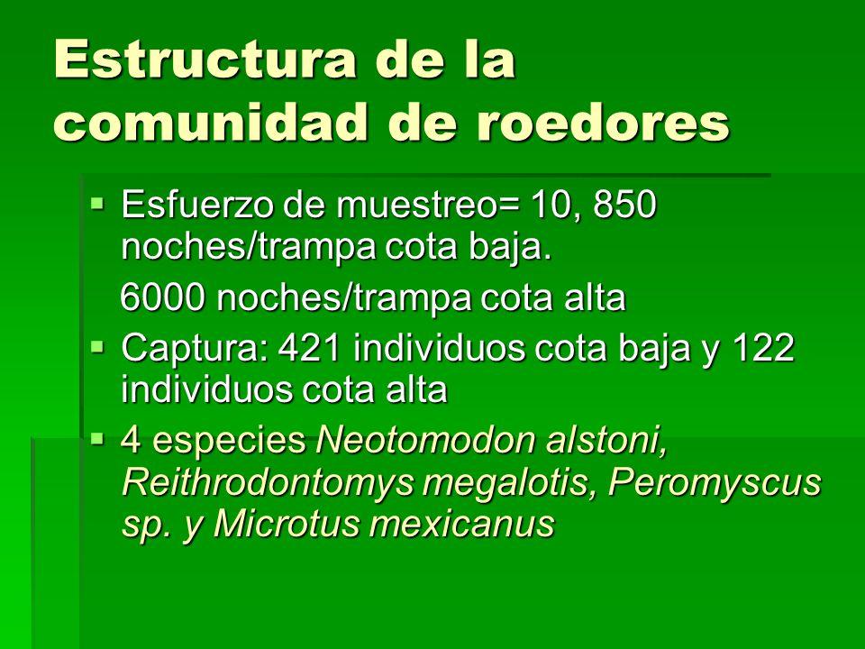 Estructura de la comunidad de roedores Esfuerzo de muestreo= 10, 850 noches/trampa cota baja.