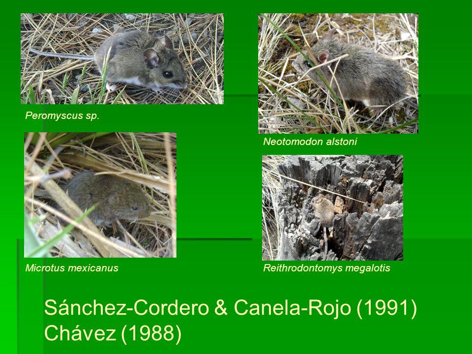 Peromyscus sp. Microtus mexicanus Neotomodon alstoni Reithrodontomys megalotis Sánchez-Cordero & Canela-Rojo (1991) Chávez (1988)