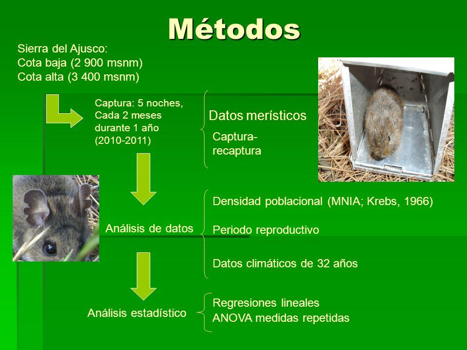 Métodos Sierra del Ajusco: Cota baja (2 900 msnm) Cota alta (3 400 msnm) Captura: 5 noches, Cada 2 meses durante 1 año (2010-2011) Captura- recaptura