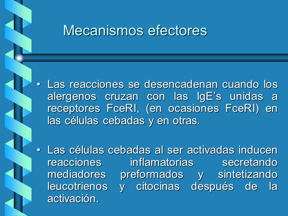 Mecanismos efectores Las reacciones se desencadenan cuando los alergenos cruzan con las IgEs unidas a receptores FceRI, (en ocasiones FceRI) en las cé