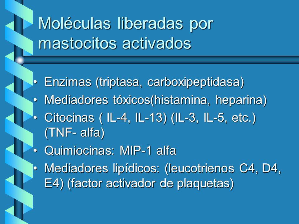 Moléculas liberadas por mastocitos activados Enzimas (triptasa, carboxipeptidasa)Enzimas (triptasa, carboxipeptidasa) Mediadores tóxicos(histamina, he