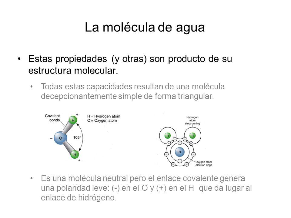 La molécula de agua ¿H 2 O ó H 1.5 O?